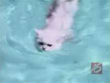 kmtr-oregon-cat-pool